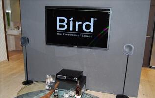 Focal Audio Products - The Birds Come to Roost