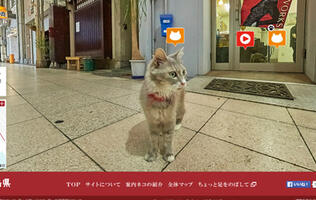 Forget Google's Street View. Cat Street View is here!