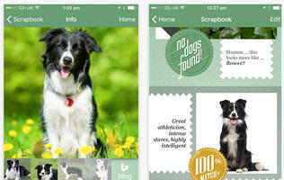 Know what dog breed you look like with this Microsoft app